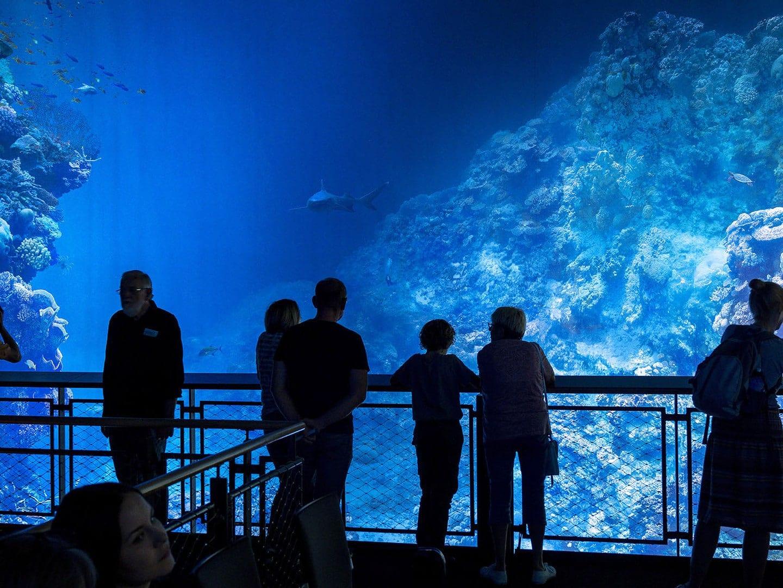 Die Korallenwelt am Great Barrier Reef