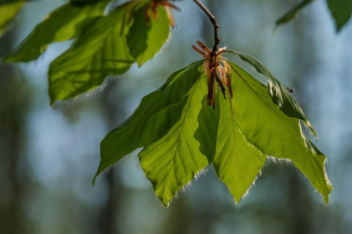 Frühling im Wald und auf der Wiese