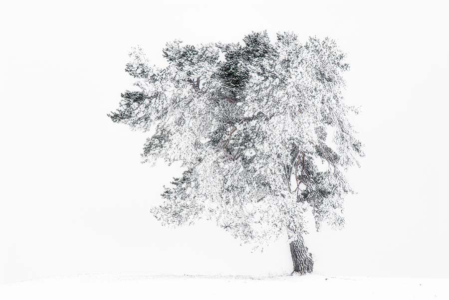 """"""" Winterzauber """" Jenseits von den zur Zeit überfüllten Loipen, Ski-und Schlittenhängen, entdeckt man diese herrlichen """" Schneebäume """" auf der schwäbischen Alb"""