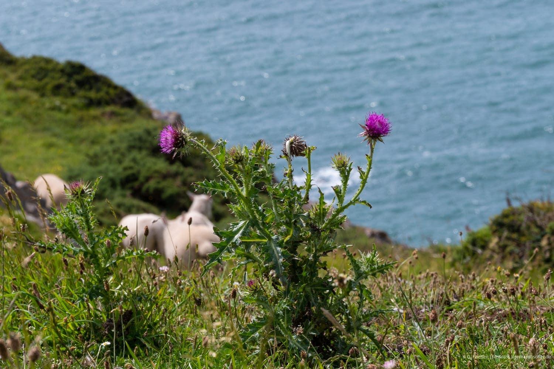 Penrhyn Gŵyr - Halbinsel Gower an der Südküste von Wales