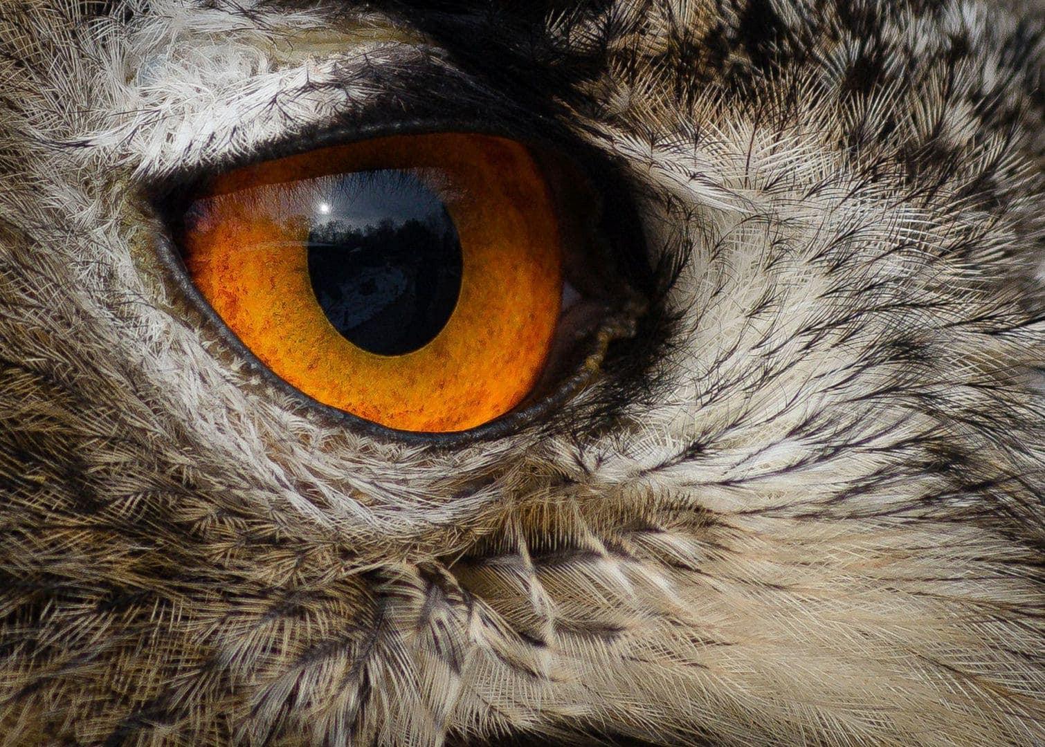 Scharfe Augen