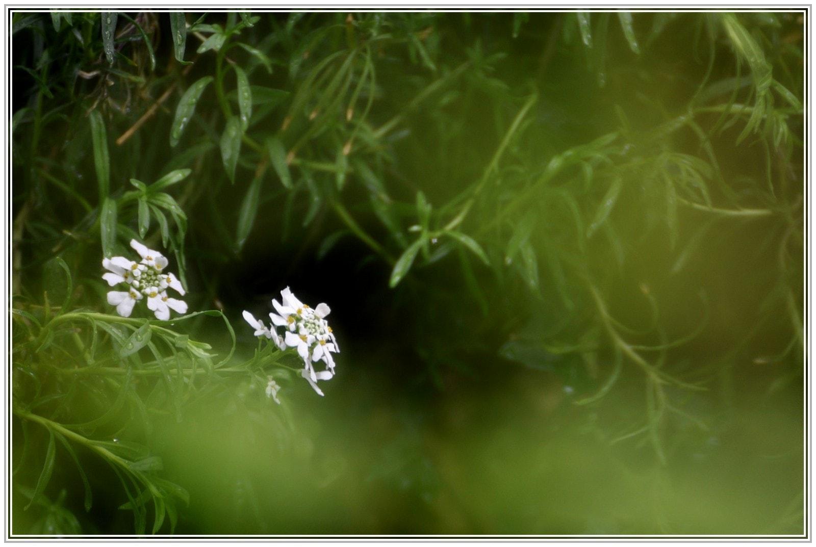 Blüten in unserem Garten