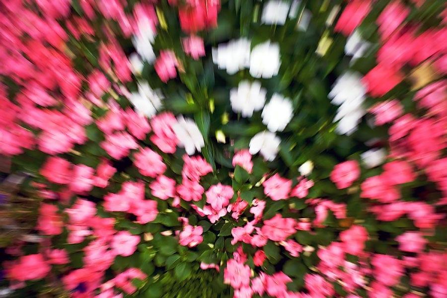 """"""" Flower-Power """"..........mal ganz anders"""