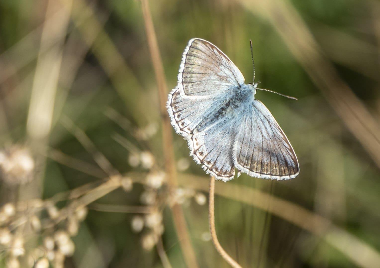 Schmetterlingsausflug auf der Pfullinger Wanne