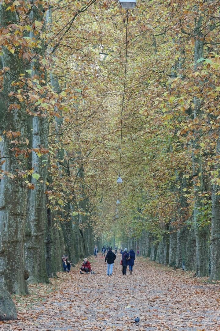 Tübinger Herbst