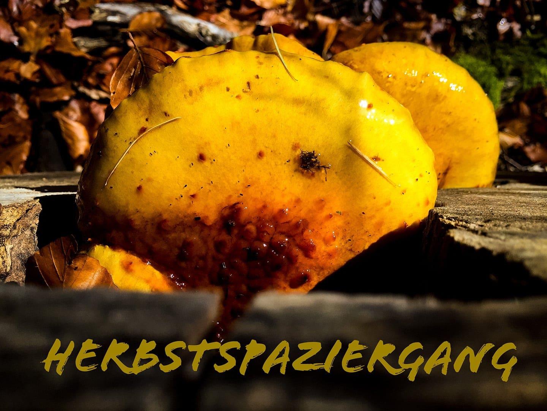 Spaziergang im Herbstwald. Alle Fotos mit iPhone, Bearbeitung mit Photoshop Express im iPhone