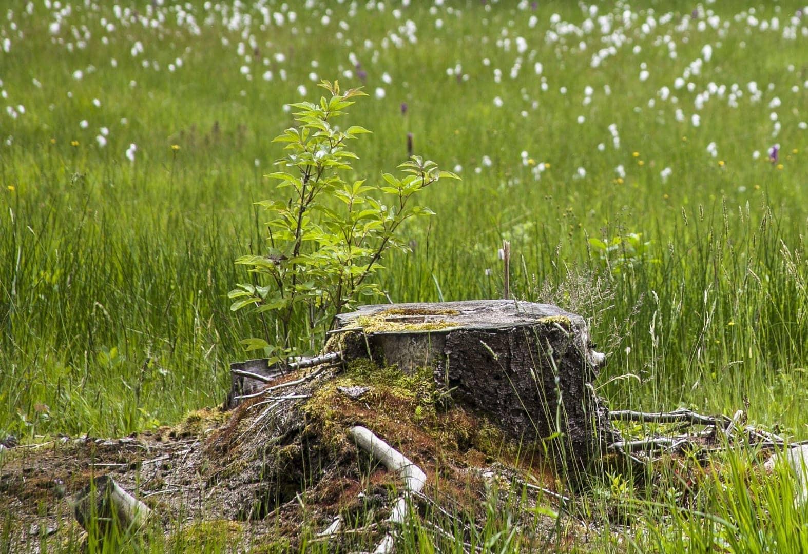 Naturschutzgebiet Hinterzartener Moor