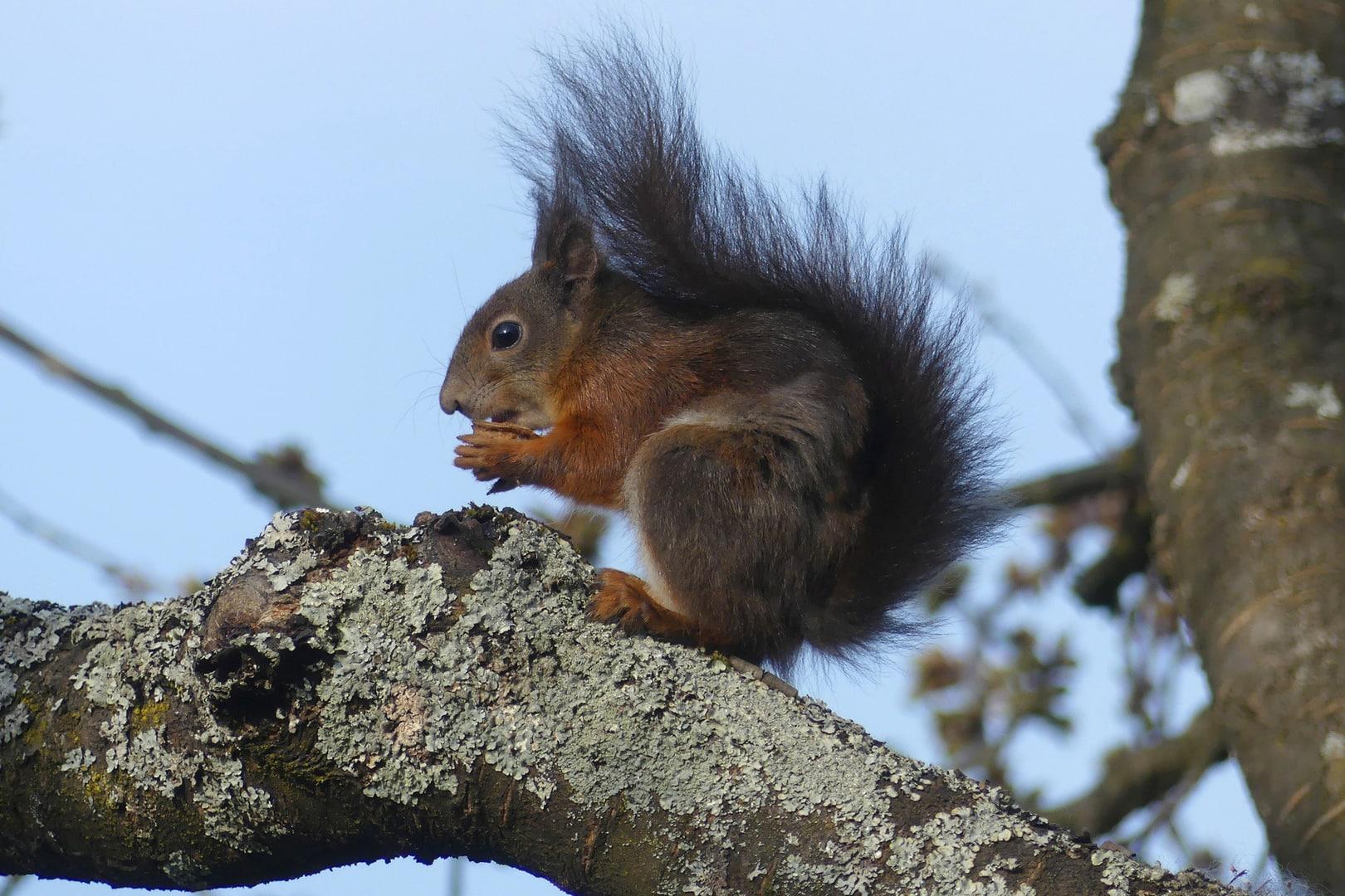 Eichhörnchen in unserem Garten